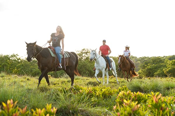 Kauai Horseback Riding Group