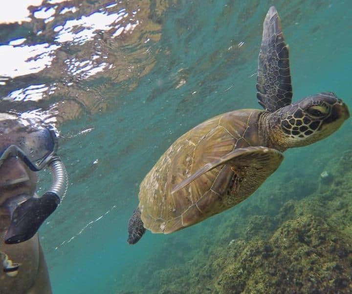 Man swimming along side sea turtle during Kauai Snorkeling Tour