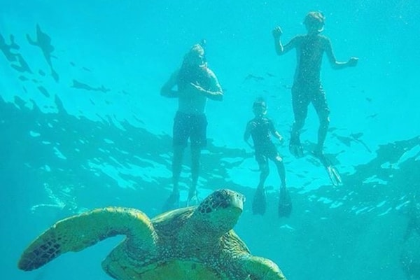 Kauai snorkeling tours - snorkeling with turtles