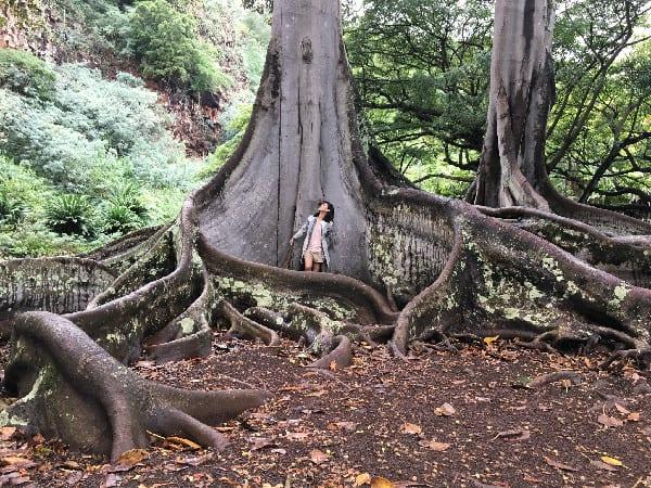 Allerton Valley Garden Tour Tree