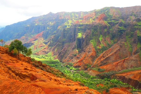 Waimea Canyon Cliff Trail Kauai