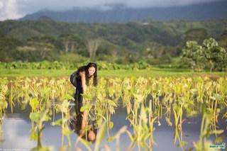 Kauai Taro Patch havesting