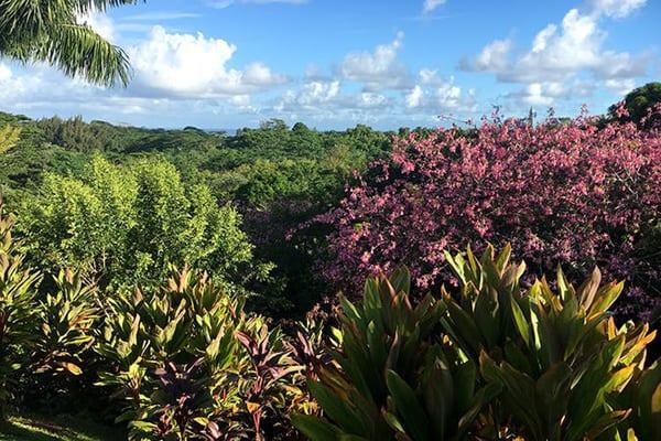 Princeville Botanical Gardens Tour 1