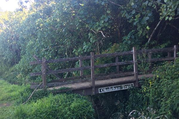 Okolehao Trail Kauai