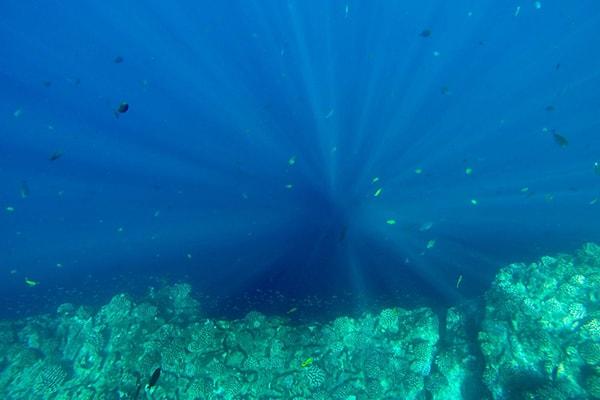 Niihau Coral Reef